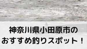 神奈川県小田原市のおすすめ釣りスポットに関する参考画像